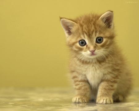 舞台ドタキャン騒動で土屋アンナの株が急上昇!「子猫を拾ったヤンキー」状態の祭り上げられ方