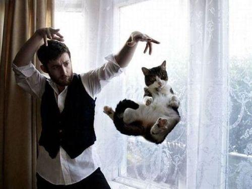 猫好きなら知っておくべき…ひと目でわかる「さわると喜ぶ場所、喜ばない場所」:らばQ