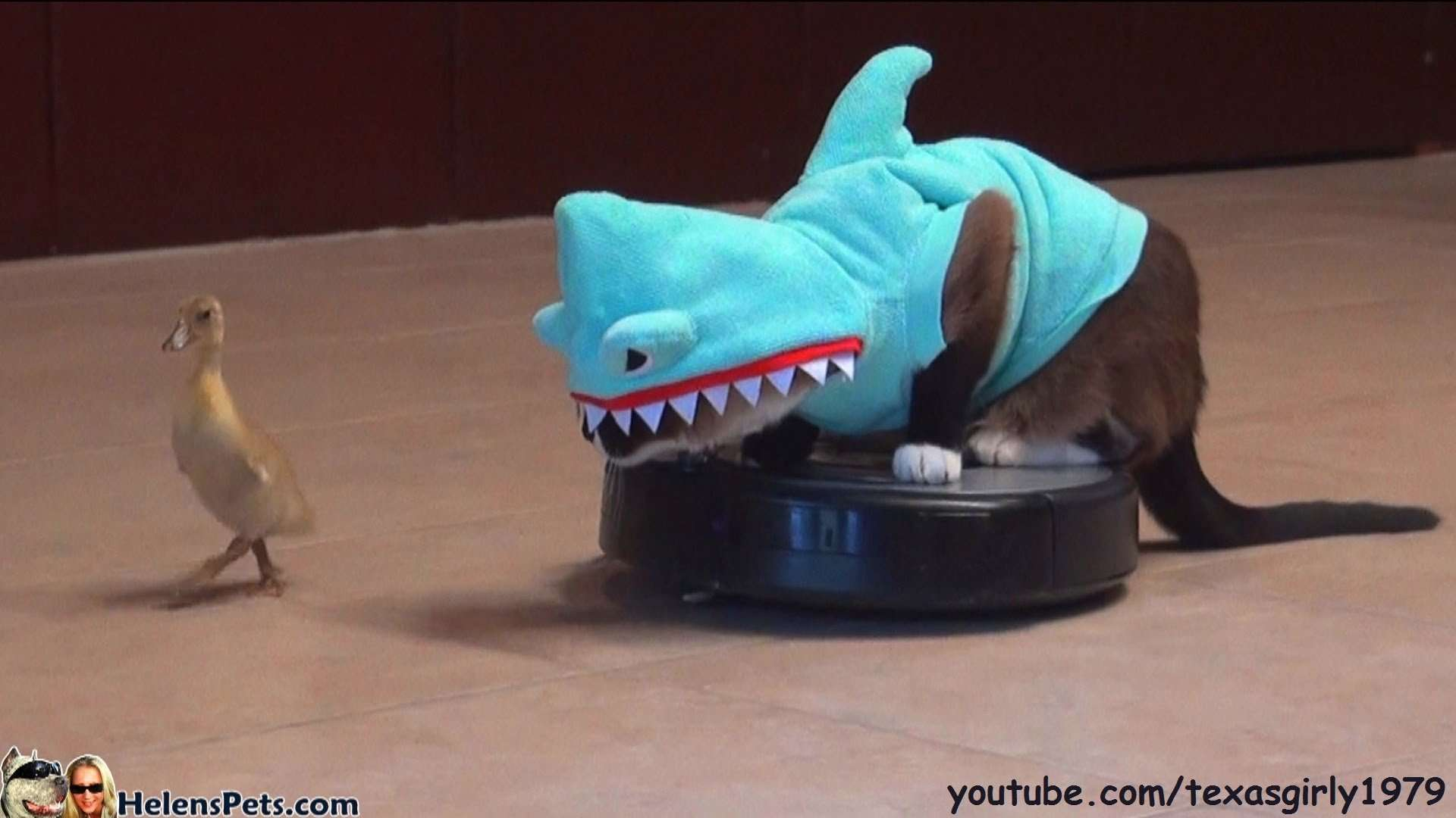 Cat In A Shark Costume Chases A Duck While Riding A Roomba - YouTube