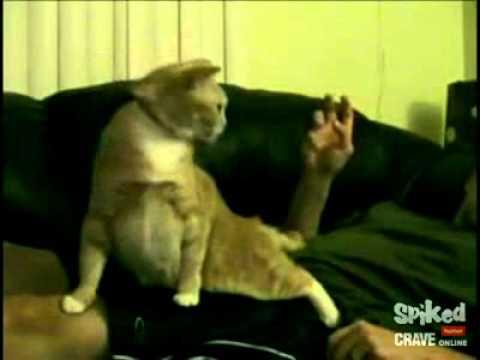 性感帯をいじられると歌いだす猫の動画 - YouTube