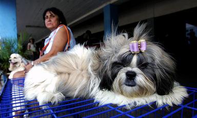 イヌにかまれて感染症に、カナダ女性が腕と両足失う 国際ニュース : AFPBB News