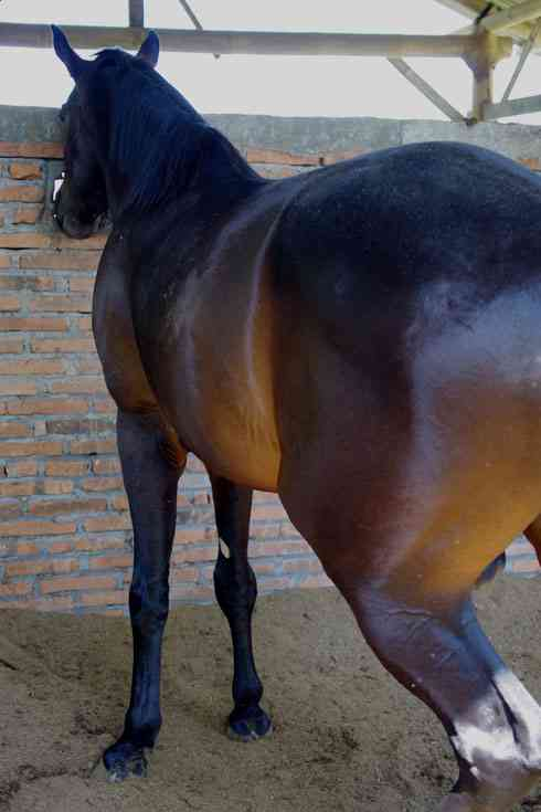 【米テキサス州】人間の女より馬のメスが好き、変態レイプ魔逮捕