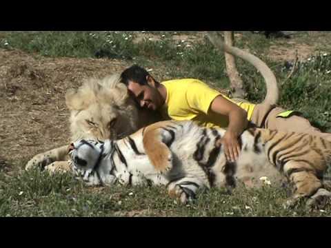 yo,un tigre y un leon - YouTube