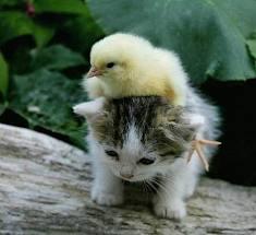 可愛い動物のコラボを見て癒されましょう