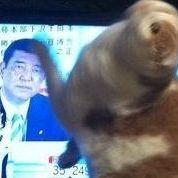 石破茂幹事長に猫が反応して興奮状態になると話題に - NAVER まとめ
