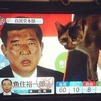 石破茂幹事長の顔が黒すぎて猫が興奮しないと話題に - NAVER まとめ