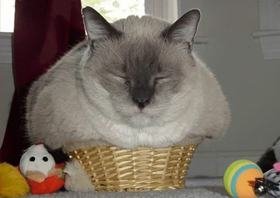 「ネコは液体である」ということを証明する写真たちをご覧ください