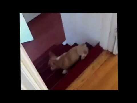 Cooper does a barrel roll! - YouTube