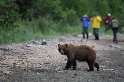 娘「お母さん!今、クマに食べられてる・・・」→母「またそんな嘘ついて!」 - EUROPA(エウロパ)