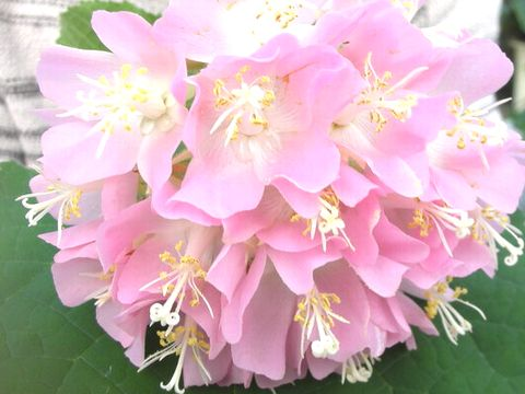 綺麗な花の画像を持ち寄るトピ