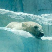 癒される!日本の猛暑にトホホな上野動物園の動物たち - NAVER まとめ