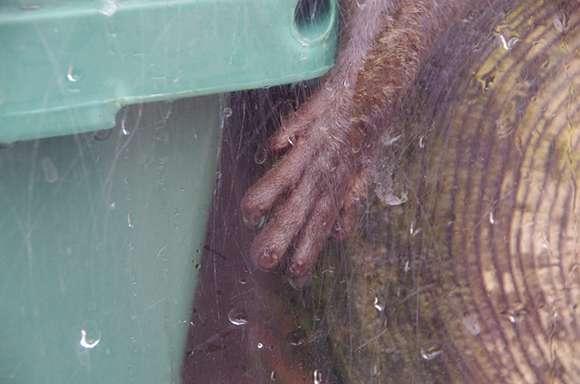 """今話題のカワウソの""""ぷよぷよ""""の手と握手できる水族館!まるで「E.T.」と交流しているみたい!!"""