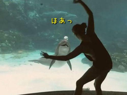 どっちが客なのかわからない…水族館のガラス越しにイルカを楽しませる女性(動画):らばQ