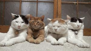 ネコのGIF画像がおもしろすぎるwww - NAVER まとめ