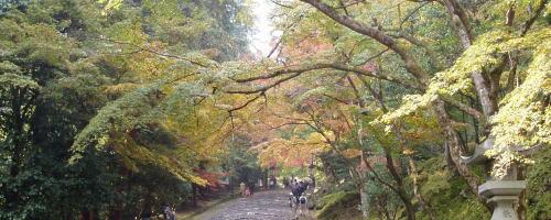 鳴無神社(高知):ぶらり寺社めぐり