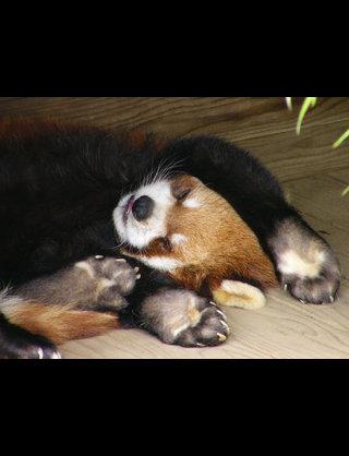 可愛い動物たちが集まる不思議なトピ