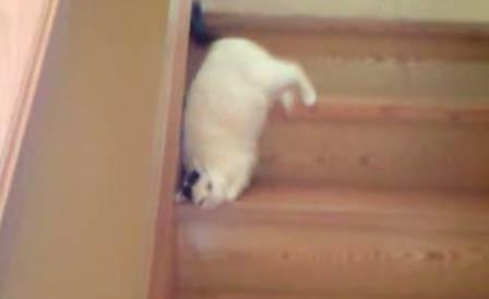 この発想はなかった…新しい階段の下り方を開発してしまった犬(動画)