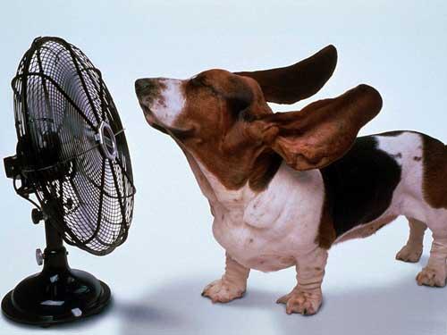 ダメだとわかっているのに、暑い日に家でついしてしまうことって?