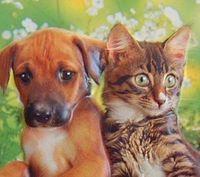 犬派か猫派で分かる生活態度・傾向まとめ - NAVER まとめ