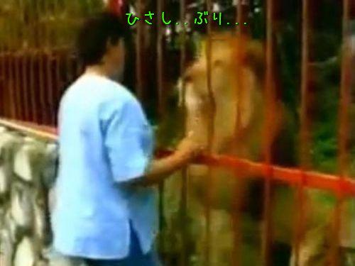 「ああ、覚えてくれてた…」ライオンの子供を保護した女性、預けた動物園で数年ぶりに再開(動画):らばQ