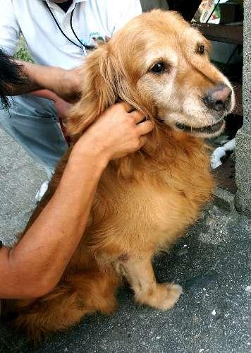 朝日新聞デジタル:容疑者確保の1分後、飼い犬死ぬ 山口の放火殺人 - 社会