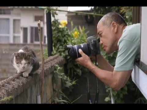 岩合光昭写真展ビデオ ねこにカメラを向けるとき - YouTube
