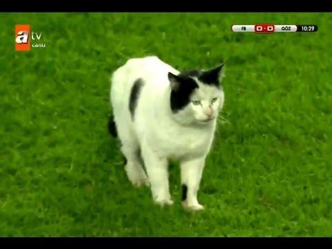 サッカーの試合中に猫が乱入 猛ダッシュで飛び越え失敗(HD) - YouTube