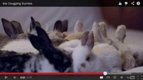 モフモフ天国 ウサギ主演のホテルのCMがかわいすぎる