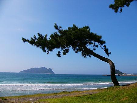 【福岡】松の根に穴を開け除草剤で枯らす…太陽光発電所を営む男性「太陽光パネルが日陰になるから」と発言