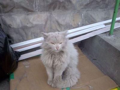 こんなに変わるとは…拾われて綺麗サッパリした捨て猫たちの写真いろいろ:らばQ