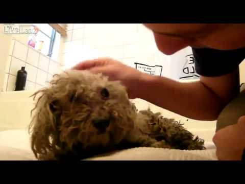 Hope for Paws Dog Rescue - Fiona - YouTube