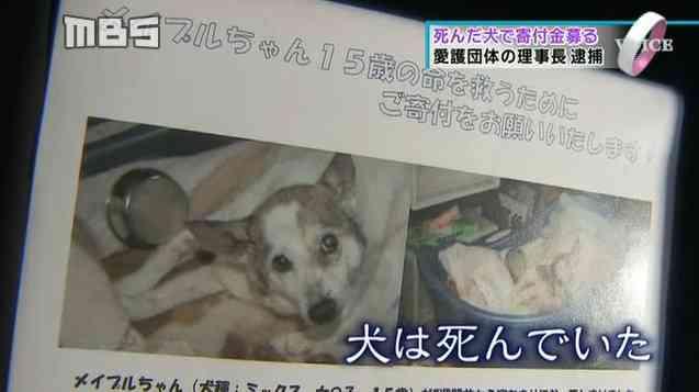 【真っ黒!】福島の犬猫募金団体が実は動物虐待団 …