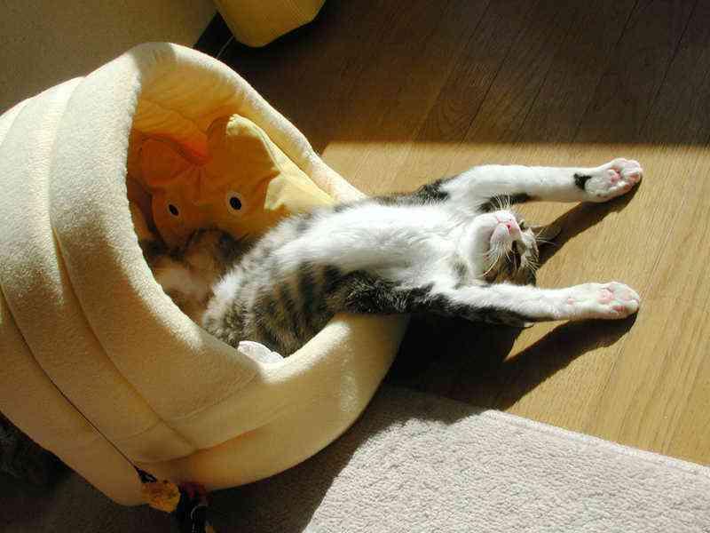 神を目指す変なポーズの猫