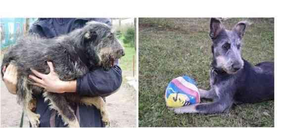 もう一度信じたい。捨てられた犬が新たに心を開くとき…捨て犬たちのビフォア・アフター写真