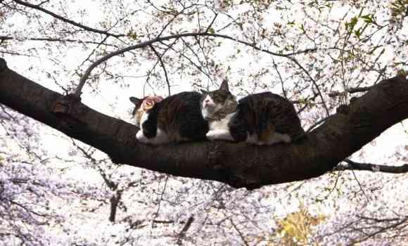 銀座の看板で猫が寝ているのは猫おじさんによる愉快犯だが何度警官に絞られても懲りないらしい - hara19.jp