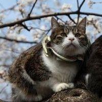 上野の桜猫は虐待?まだ続いている「猫おじさん」の連れ回しの実態 - NAVER まとめ