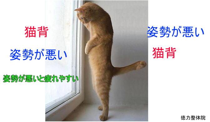 ゲーム好きの子どもは「ゲーム猫背」になりやすいらしい。椎間板ヘルニアになる可能性も