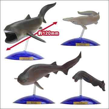 立体カプセル百科事典 NHKスペシャル 謎の海底サメ王国 | 商品詳細情報 | 商品をさがす | タカラトミーアーツ