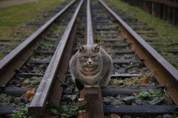 JRの線路に洋式トイレの便座を置いた小学生らを補導「電車がはねる様子を見たかった」奈良署