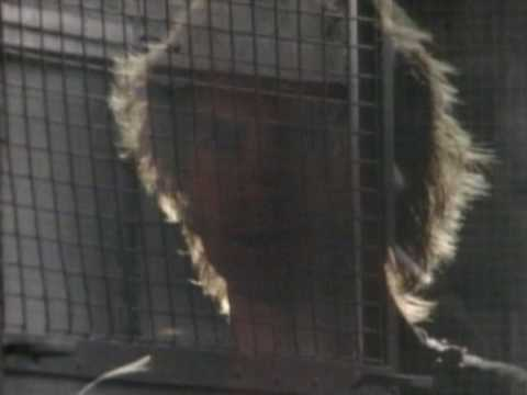 The Police - Invisible Sun - YouTube