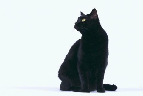 身に覚えアリ? スマホやPCが原因の「猫背」が話題に 【正しい姿勢はコチラ】(TABROID) - エキサイトニュース