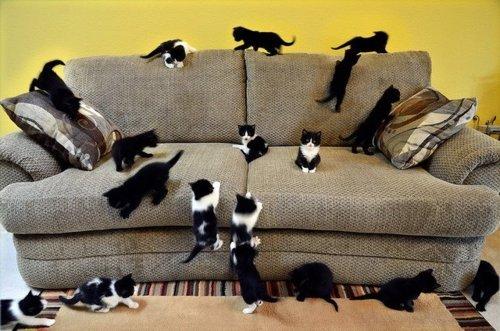 大きな猫ソファーが今ネットで話題に