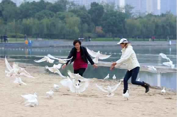 【中国】新婚カップルが結婚写真で白いハト100羽を放つ → 「食べ物だ!」と住民殺到 → ハトほぼ全滅