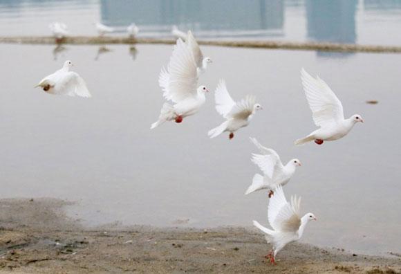 【中国】新婚カップルが結婚写真で白いハト100羽を放つ → 「食べ物だ!」と住民殺到 →ハトほぼ全滅   ロケットニュース24