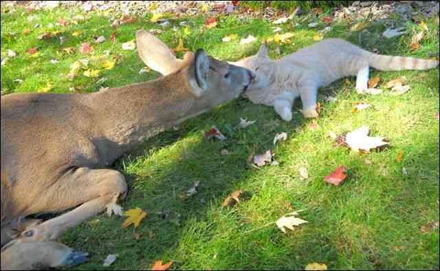 「ウチの飼い猫と野良シカが毎朝イチャイチャしてるんだけど」という画像が本当に仲よさそう