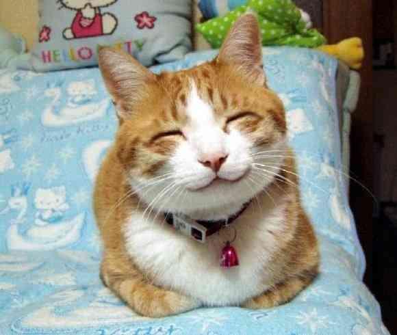 【画像】めっちゃ良い笑顔のアザラシ