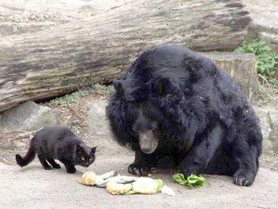 仲良しだったクマに死なれた猫、ショックを受ける:らばQ