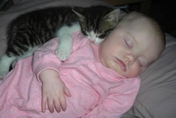 存在だけで癒される、猫と人間のぽっかぽか写真