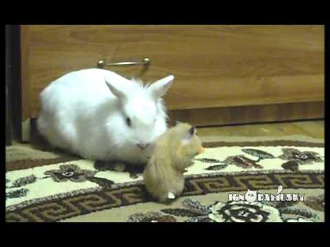 Rabbit, Hamster and One Carrot (Кролик, Хомяк и Морковка) - YouTube