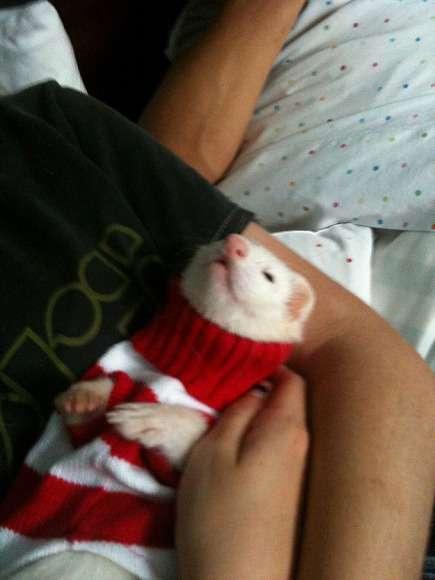 これはカワイイ! セーターを着たアニマルたち♪